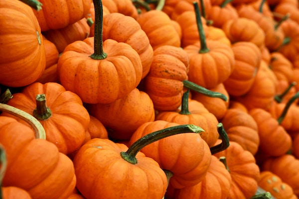 The Best Pumpkin Picking Places In And Around Swindon