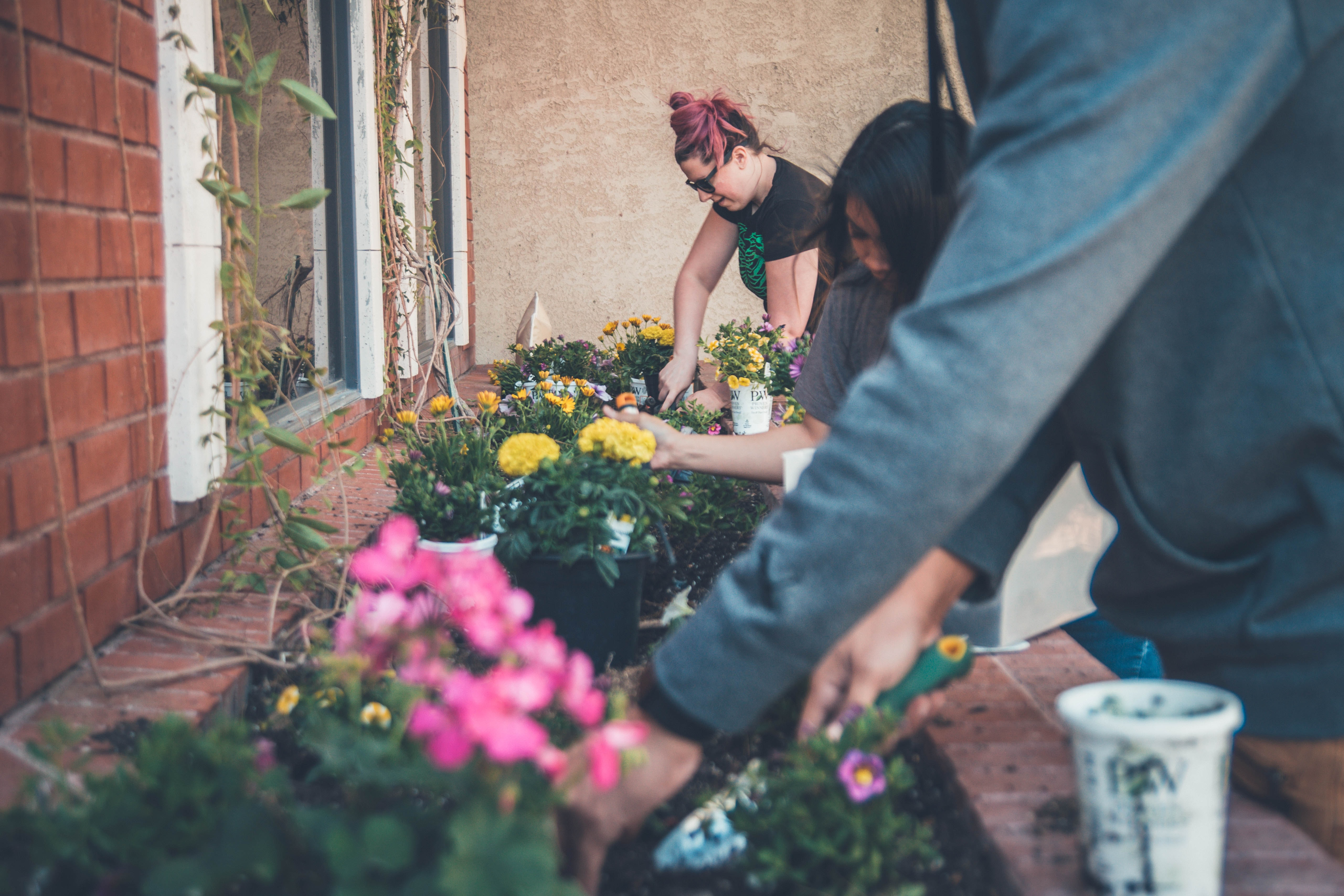 Isolation gardening: How to grow your own veg and summer flowers