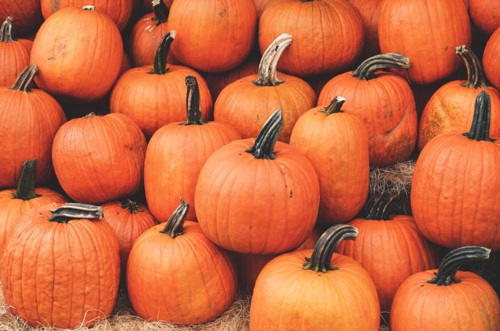 Top Tips for Picking the Best Pumpkins