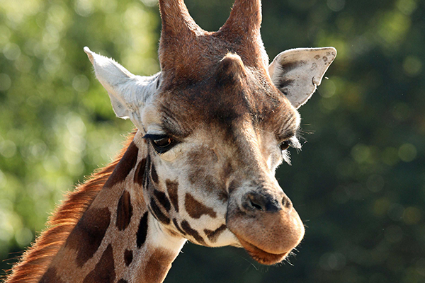 Cotswold Wildlife Park Day Trips