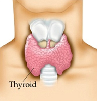 thyroid dating It's thyroid awareness month and the start of the new year, a great time to take control of your health and stop putting up with annoying symptoms that leave you feeling less than ideal i'm all about little tweaks that make a big difference, like making over your breakfast eating a plant-based, anti-inflammatory diet is essential for thyroid health.