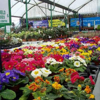 Greatfield Garden Centre