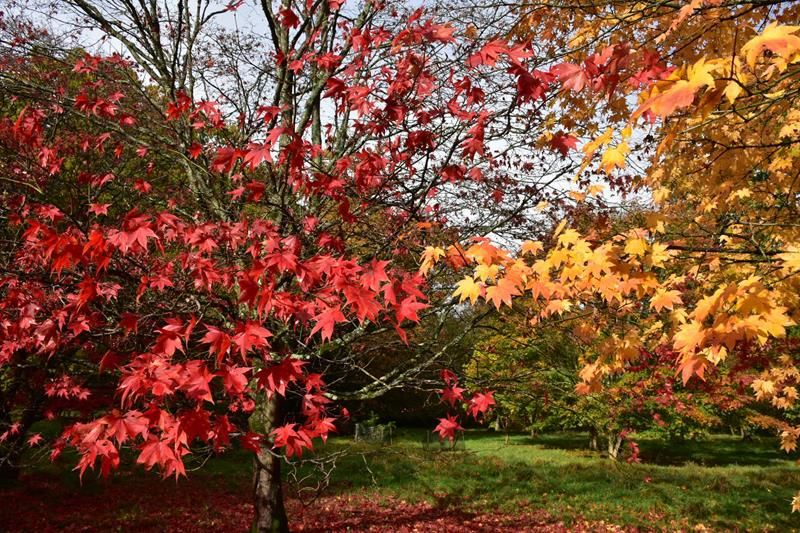 SNAPPED: Autumn at Westonbirt Arboretum