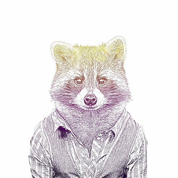 The Events Raccoon
