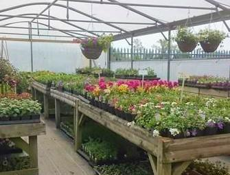 Chelworth Nurseries